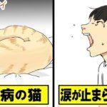 【実話】猫嫌いだった父の一言に…家族全員が涙した【感動して泣ける漫画】